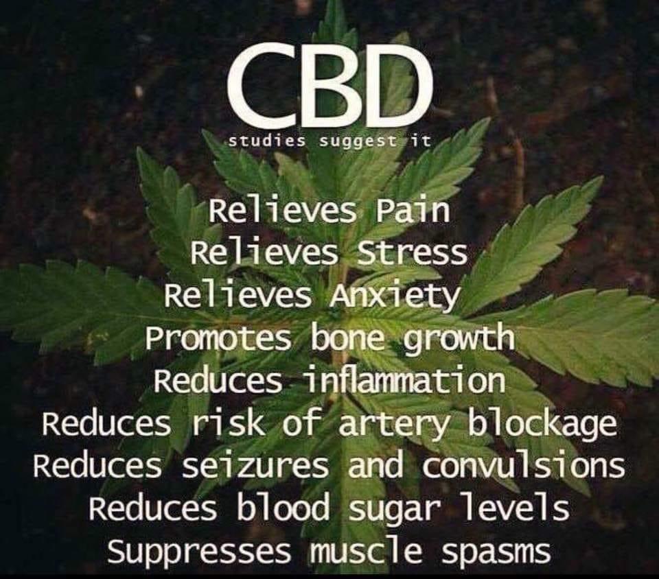 cbd studies suggest